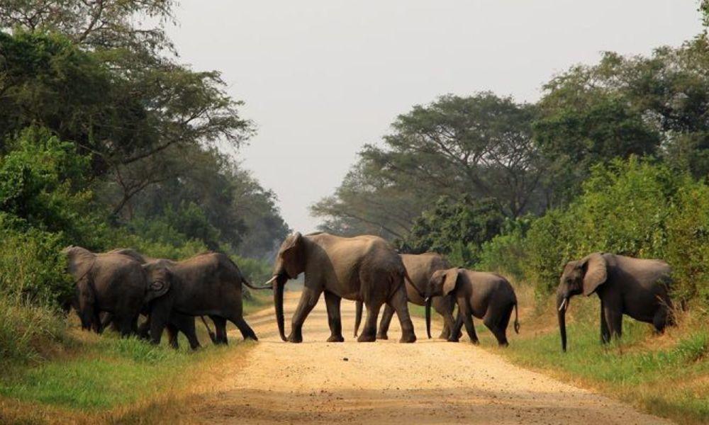 16-days-uganda-wildlife-safari-holiday-800x400