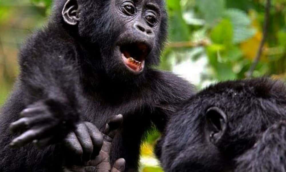 9-days-rwanda-goirlla-tracking-adventutre-safari-990x490