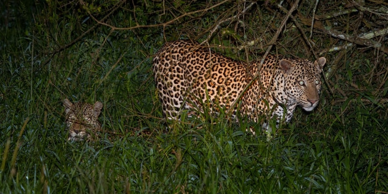 Leopards_Mburo_Safari_Lodge_IMG_7842-1000x563