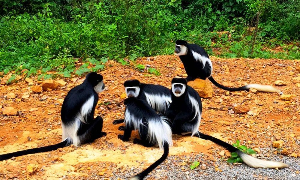 ugandasafaris